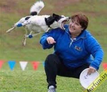 Cão brincando