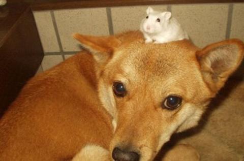 cão e rato