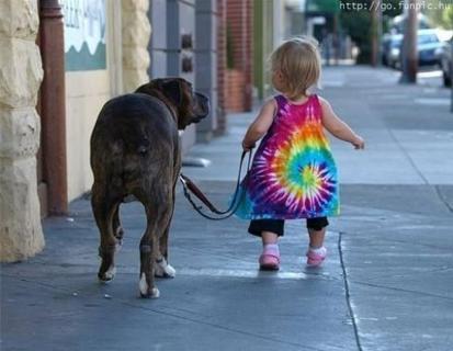 Cão Passeando