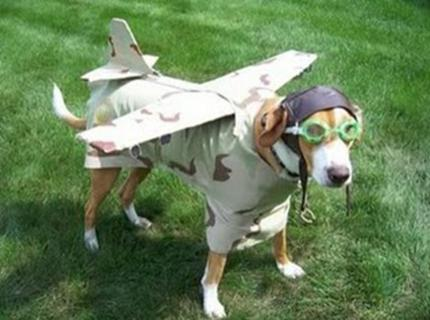 Cão fantasiado de avião