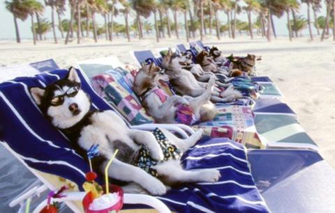 Cães de férias