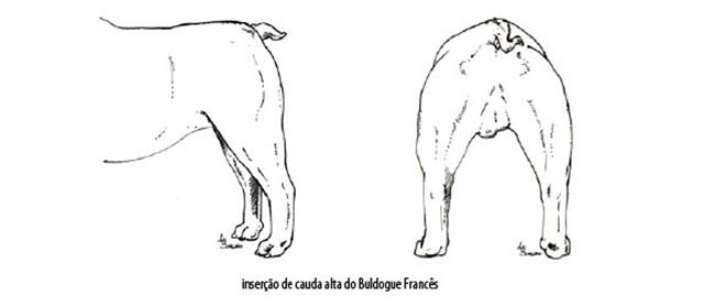 Capturar (Copy) buldogue frances (100)