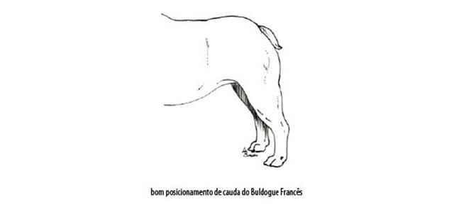 Capturar (Copy) buldogue frances (102)