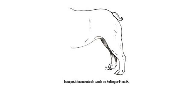 Capturar (Copy) buldogue frances (103)