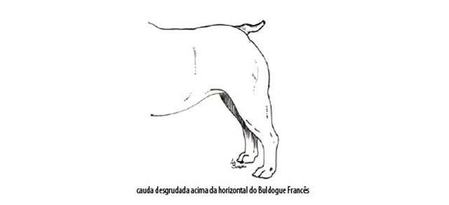 Capturar (Copy) buldogue frances (105)