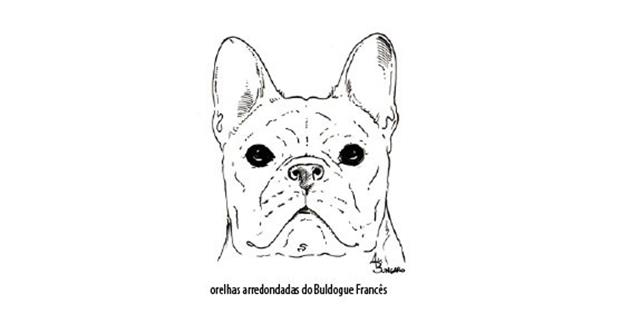 Capturar (Copy) buldogue frances (65)