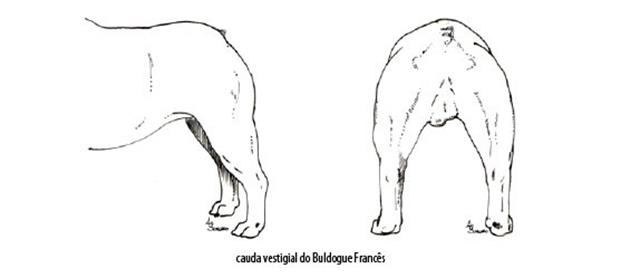 Capturar (Copy) buldogue frances (95)