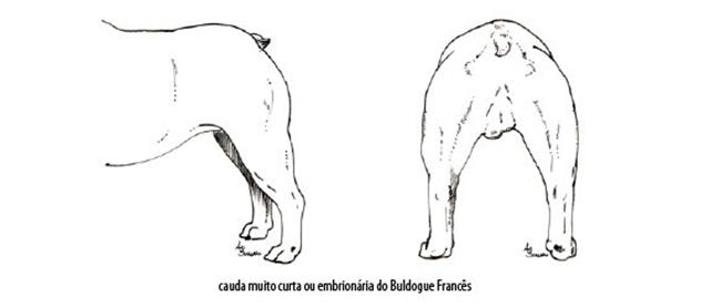 Capturar (Copy) buldogue frances (96)