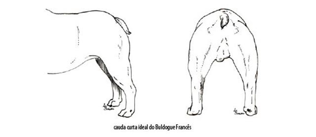 Capturar (Copy) buldogue frances (97)