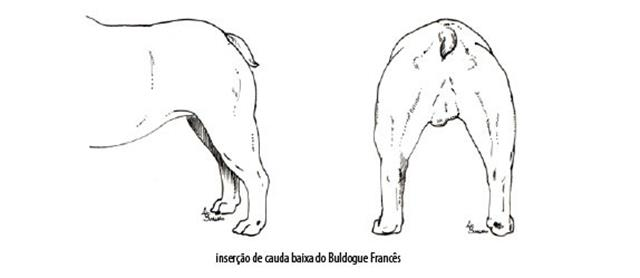 Capturar (Copy) buldogue frances (99)