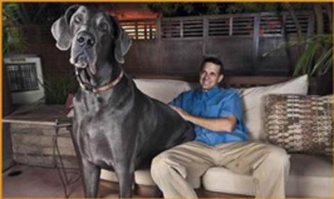 cão enorme