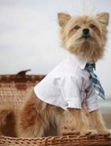 cão de gravata