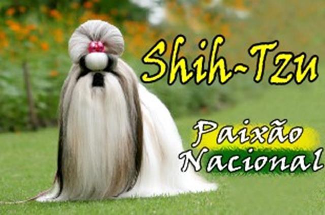 SHIH TZU 10 (Copy)