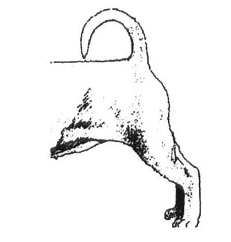 SHIH TZU 43 (Copy)