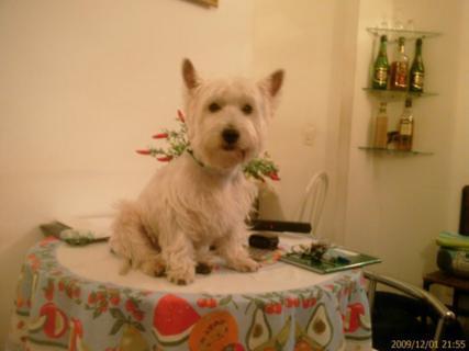 Cão na mesa