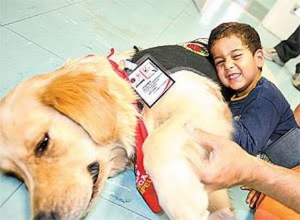 Cães que curam