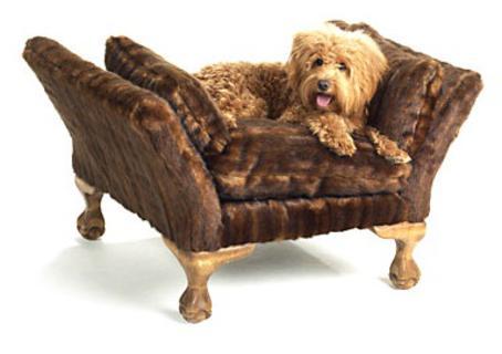 Cão no sofá