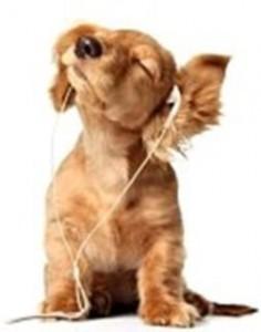 Cão ouvindo música