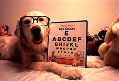 Cão de óculos