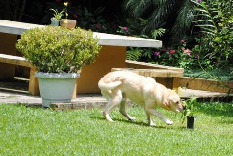 Cão no jardim