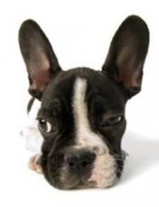 Perfil do cão