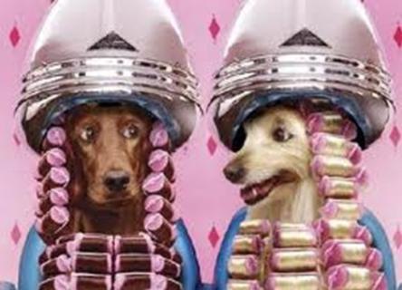 cães no salão