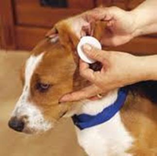 identificação canina