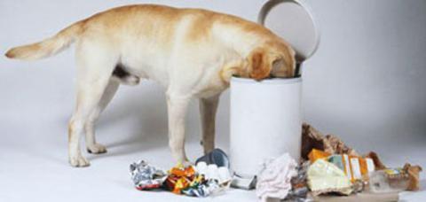 remexendo o lixo