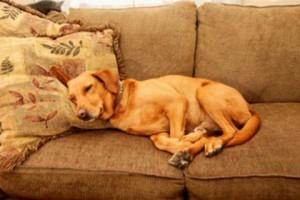 Deitado no sofá