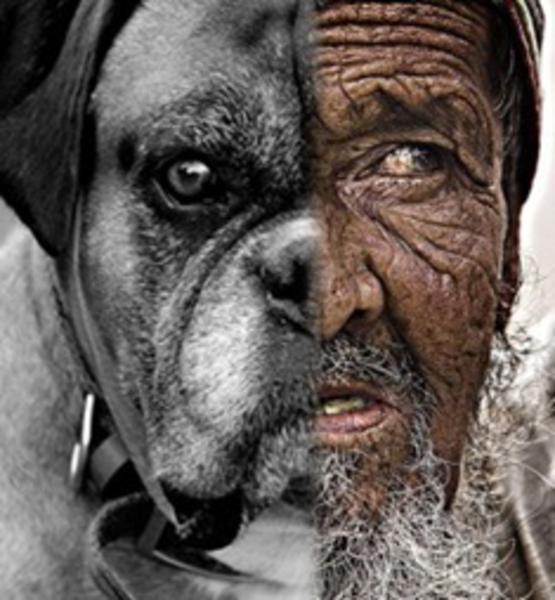Idade Homem x Cão