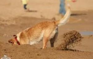 cavando na areia