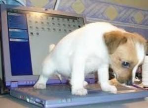 Cão em cima do computador