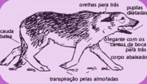 Stress do animal