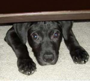 Cão embaixo da cama
