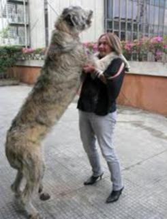 Cão pulando na dona