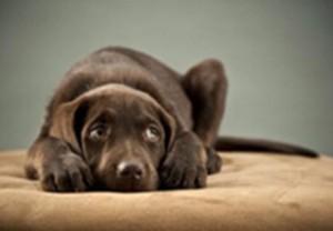 Cão tímido