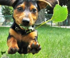 Cão comendo folhas