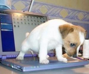 Em cima do computador