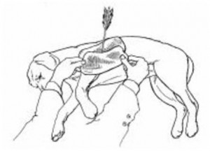 Ilustração cachorro ferido