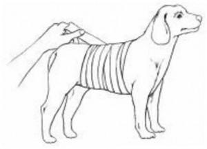 Ilustração cachorro enfaixado