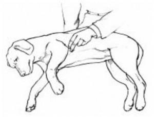 Ilustração Cão Inconsciente
