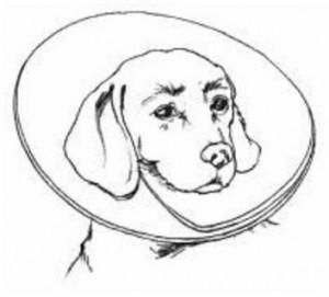 Imoblizador de cães