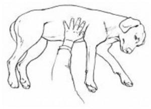 Ilustração de cão inconsciente
