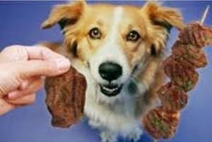 Cão se alimetando