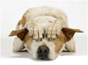 Cão tapando os olhos