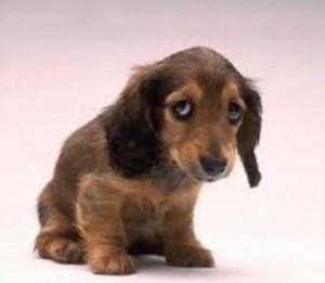 Cão meigo