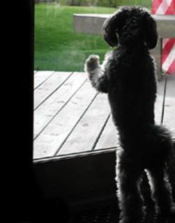 Cão de pé