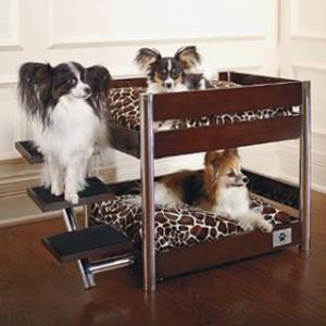 beliche de cachorro