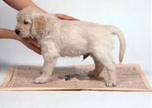 Toalha para fezes do animal
