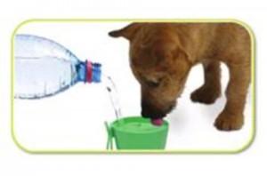 Cão bebendo água